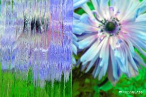 KURA-BEZBARWNY-RGB